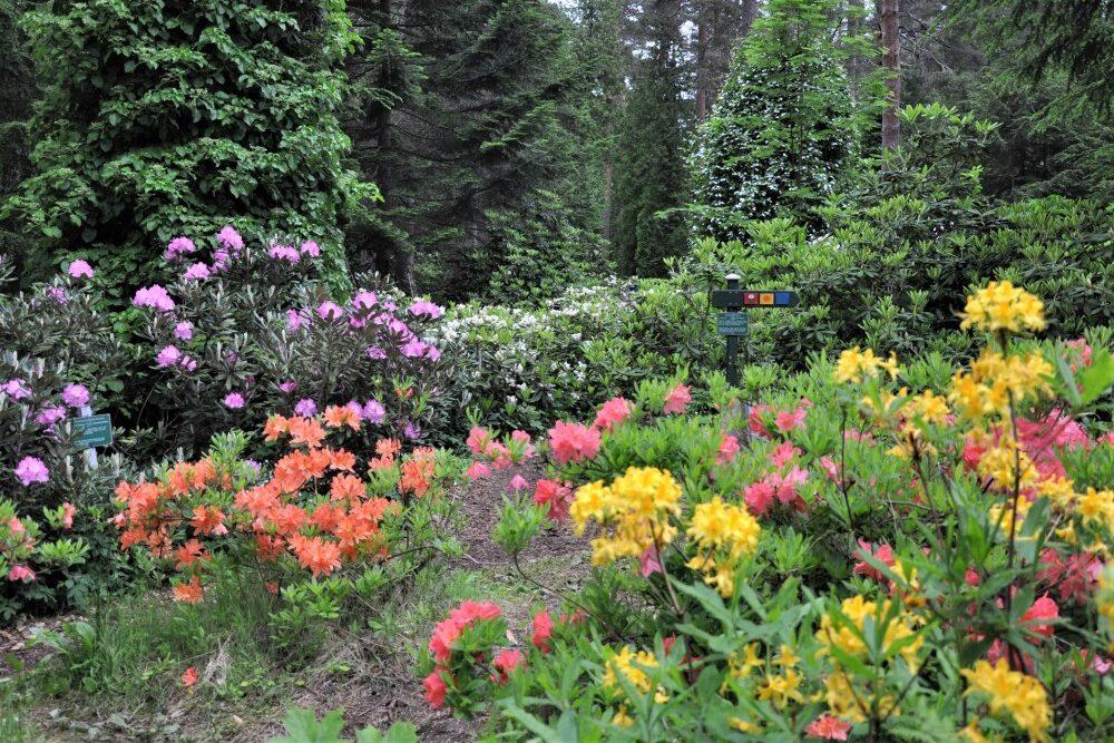 kulttuuritie Arboretum Mustila, Kouvolan Elimäki