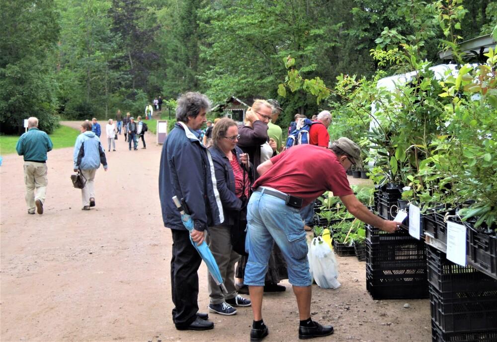Arboretum Mustilan kesäkausi huipentuu elokuun Taimipäivään la 21.8.2021 klo 10–15 1