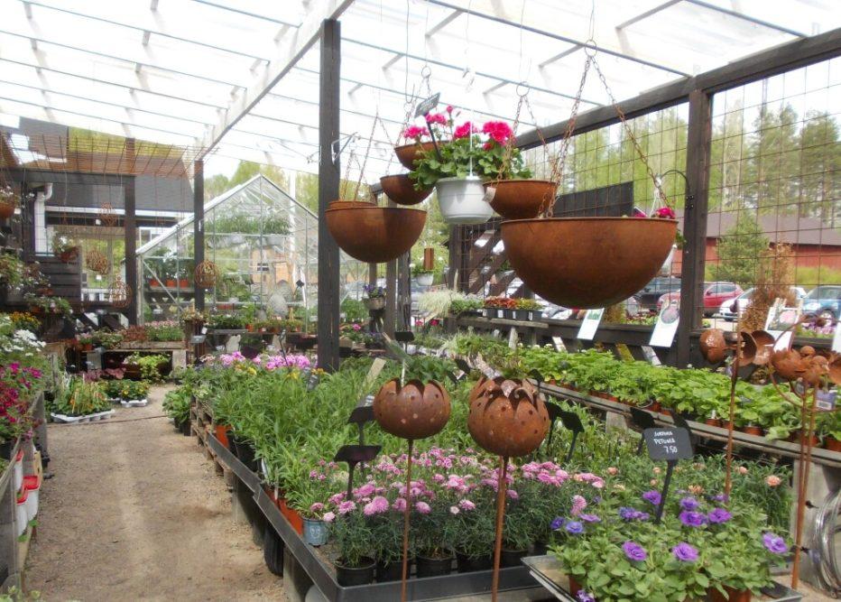 Arboretum Mustilan metsien kukkaloisto häkellyttää 2